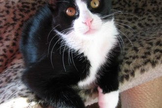 Cats , 7 Gorgeous Tuxedo Cat Pictures In Cat Category
