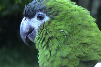 Disclaimer: The Information On This Web Site Is Meant As A Guideline ... , 8 Cool Macaw Rescue In Birds Category