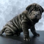 chinese shar pei , 7 Cute Pictures Of Shar Pei Dogs In Dog Category