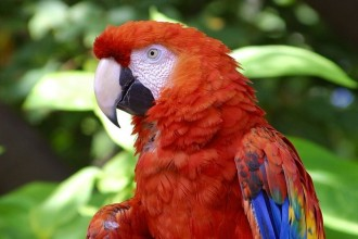 colorful Scarlet Macaw in Dog