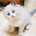 cute and funny kitten pictures , 6 Cute Funny Pictures Of Cats And Kittens In Cat Category