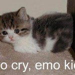 cute cat captions , 8 Cute Cat Pictures With Captions In Cat Category
