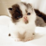 cute cat pictures , 8 Cute Cat Pictures With Captions In Cat Category