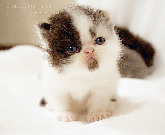 Cat , 8 Cute Cat Pictures With Captions : Cute Cat Pictures