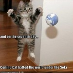 cute cats pictures , 6 Unique Funny Pictures Of Cats With Captions In Cat Category