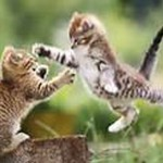 cute kitten pictures , 8 Cute Cat Pictures With Captions In Cat Category