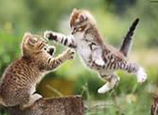 Cat , 8 Cute Cat Pictures With Captions : Cute Kitten Pictures