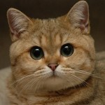 cutest cats , 7 Top Cutest Cat Picture Ever In Cat Category