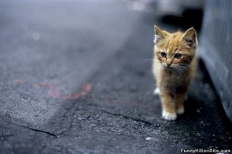 Cutest Kitten  , 7 Top Cutest Cat Picture Ever In Cat Category