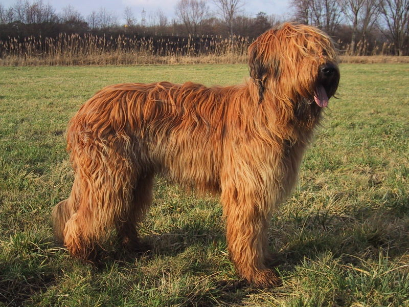 dog breeds medium to large
