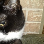 dry eye syndrome , 5 Fabulous Cat Eye Syndrome Pictures In Cat Category