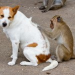 fleas inspection on dog , 7 Hottest Pictures Of Fleas On Dogs In Dog Category