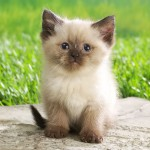 free kitten pictures , 6 Cute Funny Pictures Of Cats And Kittens In Cat Category