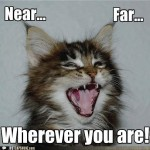 funny cat picture , 6 Unique Funny Pictures Of Cats With Captions In Cat Category