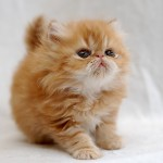 funny cat pictures with captions , 8 Cute Cat Pictures With Captions In Cat Category
