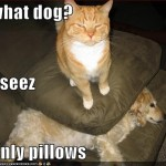 funny photos pictures , 5 Nice Funny Cat And Dog Pictures With Captions In Cat Category