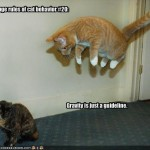 funny picture collection , 5 Nice Funny Cat And Dog Pictures With Captions In Cat Category
