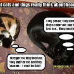 funny picture gallery , 5 Nice Funny Cat And Dog Pictures With Captions In Cat Category