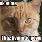 funny pictures with captions , 6 Unique Funny Pictures Of Cats With Captions In Cat Category