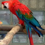 grey parrot , 7 Beautiful Green Winged Macaw In Birds Category