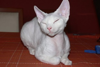 Hairless Cats , 7 Nice Pictures Of Hairless Cats In Cat Category