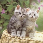 images cats kittens , 6 Cute Funny Pictures Of Cats And Kittens In Cat Category