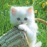 kinds of cats , 6 Cute Funny Pictures Of Cats And Kittens In Cat Category