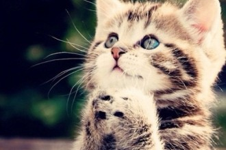 Kitten Praying For Milk , 8 Cute Cat Pictures With Captions In Cat Category