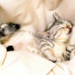 kitty pictures , 6 Cute Funny Pictures Of Cats And Kittens In Cat Category