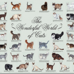 list of cat breeds image , 6 Best List Of Cat Breeds With Pictures In Cat Category