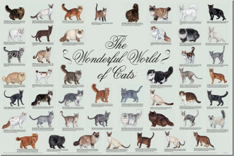 list of cat breeds image in Human