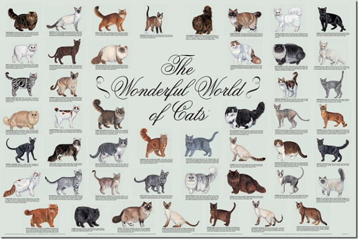 Cat , 6 Best List Of Cat Breeds With Pictures : List Of Cat Breeds Image