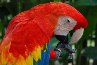 macaw bird in Dog