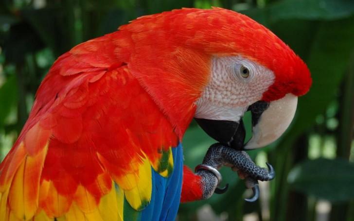 Birds , 8 Wonderful Types Of Macaws : Macaw Bird