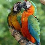 macaw bird , 7 Good Macaw Lifespan In Birds Category
