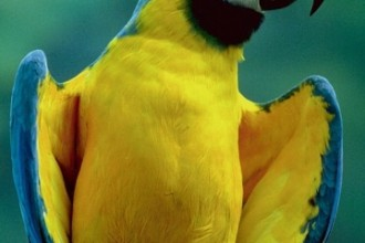 Macaw Image , 7 Lovely Glaucous Macaw In Birds Category