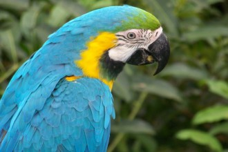 macaw parrot in Plants