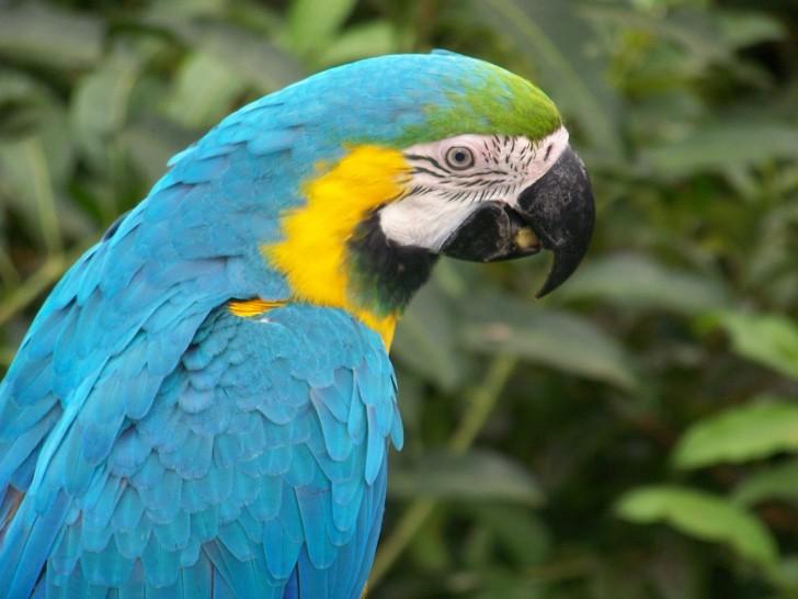 Birds , 8 Unique Macaw Breeders : Macaw Parrot