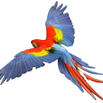 macaw scarlet , 7 Nice Parrot Clipart In Birds Category