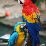 macaws , 7 Cool Pictures Of Macaws In Birds Category