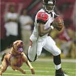 michael vick dog fighting , 6 Popular Michael Vick Dog Fighting Pictures In Dog Category