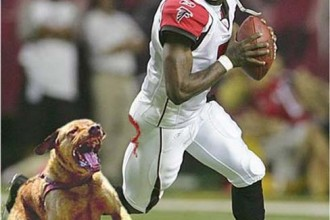 michael vick dog fighting in Human