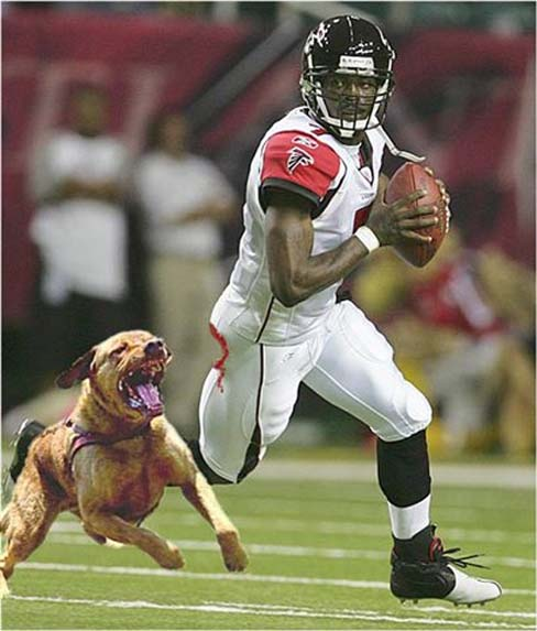 michael vick dog fighting