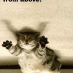 ninja cat , 6 Unique Funny Pictures Of Cats With Captions In Cat Category