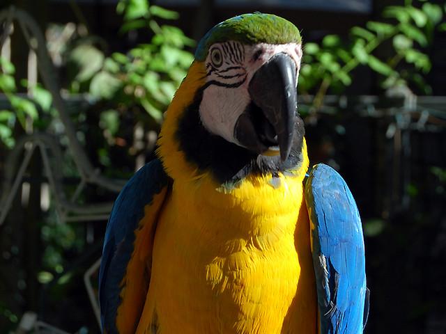 Birds , 7 Top Mccaw Parrot : Parrot