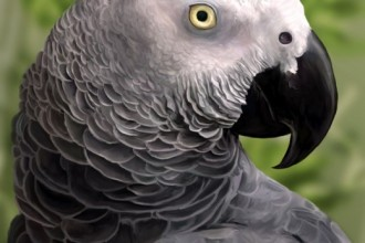 Parrot , 7 Good African Grey Parrot Facts In Birds Category
