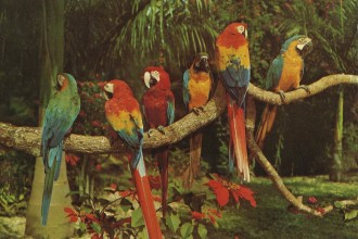 Parrots , 7 Beautiful Parrot Jungle Miami In Birds Category