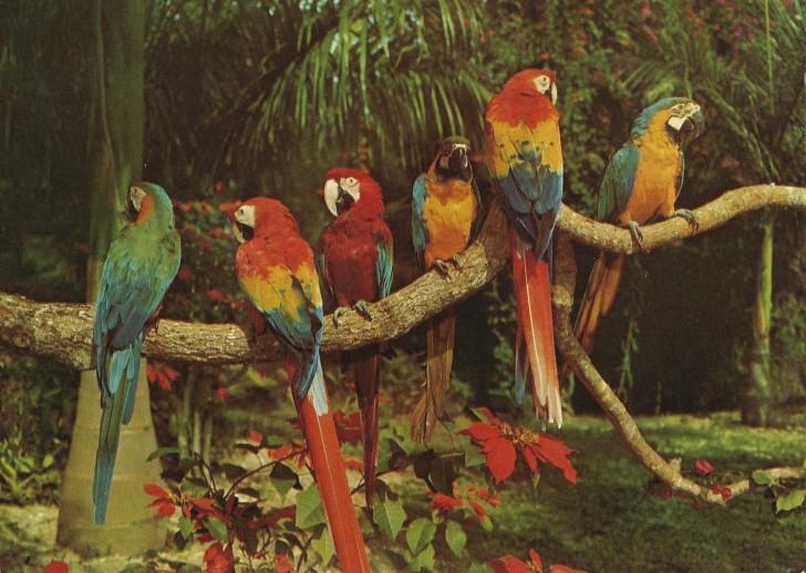 Birds , 7 Beautiful Parrot Jungle Miami : Parrots