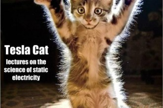 Photo Funny Wow , 6 Best Hilarious Cat Pictures With Captions In Cat Category