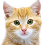 picture of cat , 6 Cute Pictures Of Cat From Victorious In Cat Category